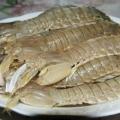 皮皮虾图鉴