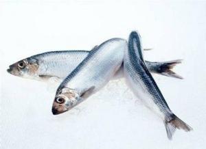 番茄酱bob手机版下载挪威鲱鱼的方法